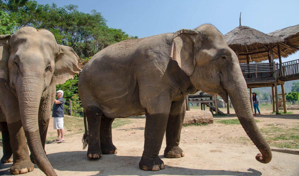 Słonie, Elephant Nature Park