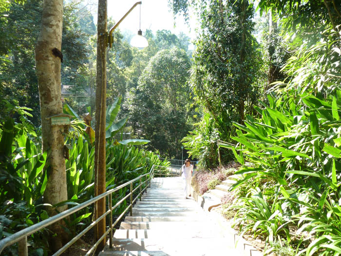 The stairs are surrounded by a lush forest