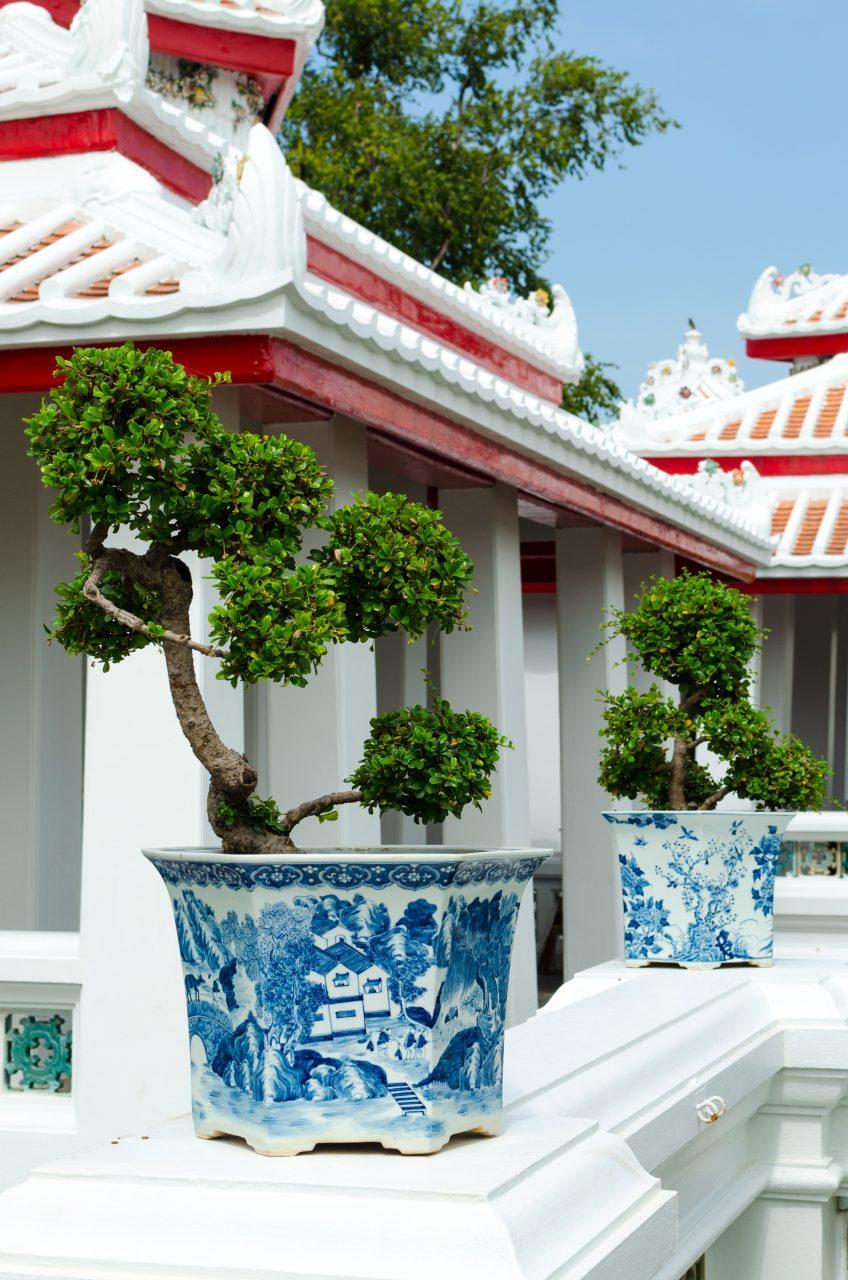 bangkok-wat-arun-bonsai