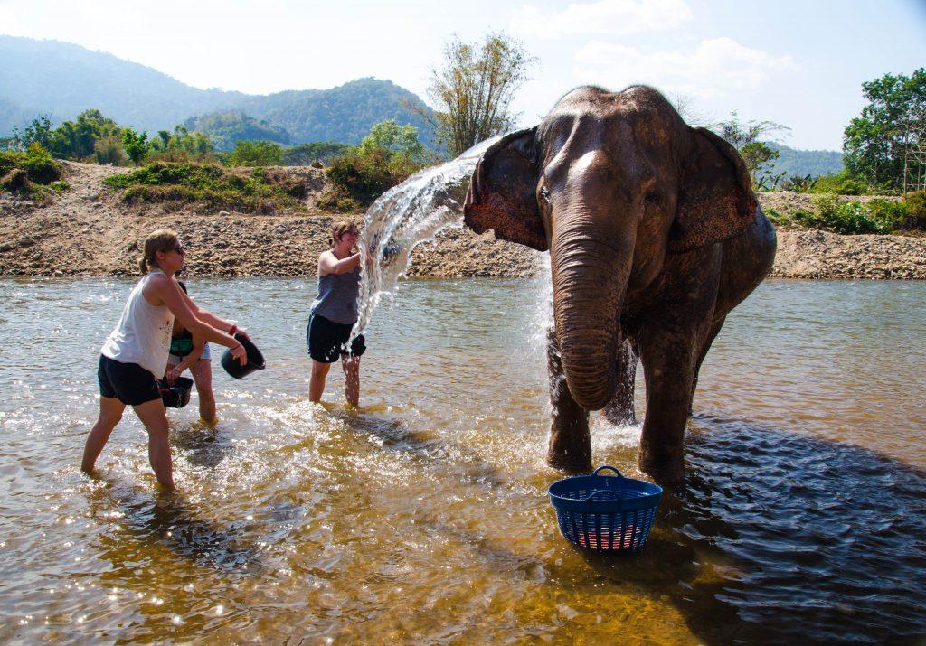 Bathing an elephant at elephant nature park