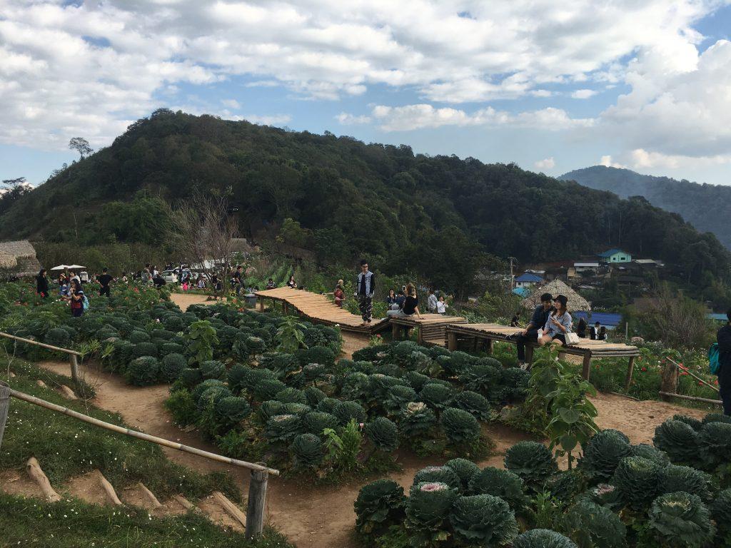 hills and graden nong hoi project