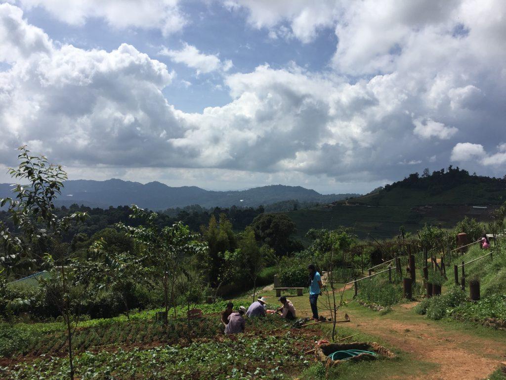 Lokalni rolnicy uczą się tutaj jak hodować truskawki i lawendę