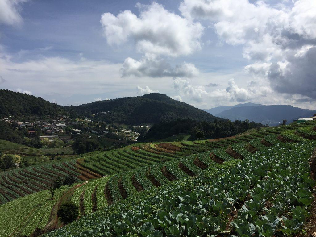 Królewski Projekt Nong Hoi