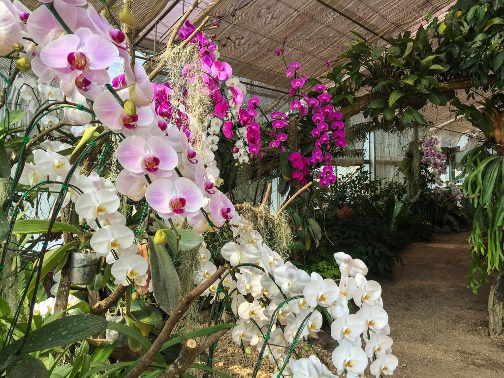 Orchids at Queen Sirikit Botanical Garden in Chiang Mai