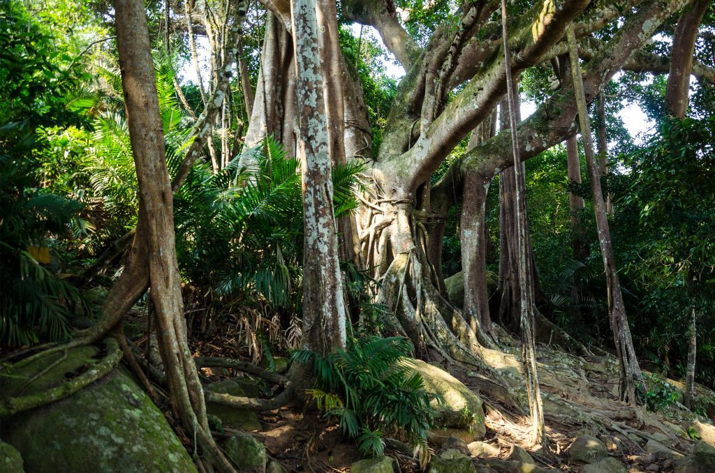 son-tra-peninsula-da-nang-banyan-tree