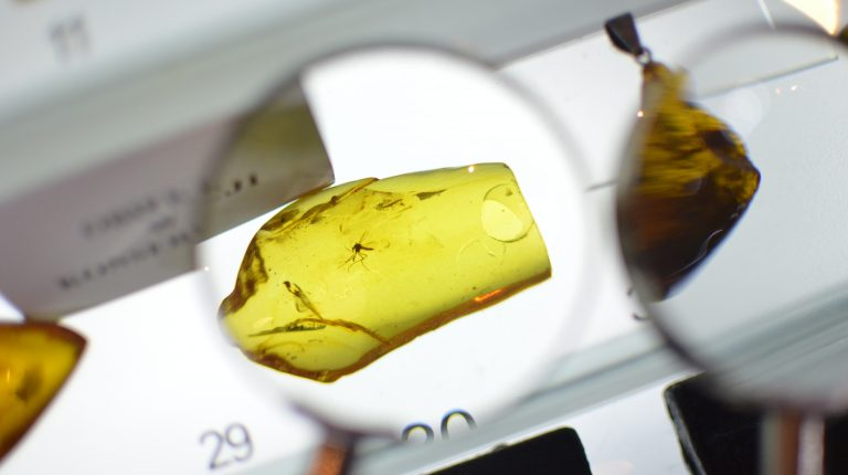 Mosquito trapped in amber