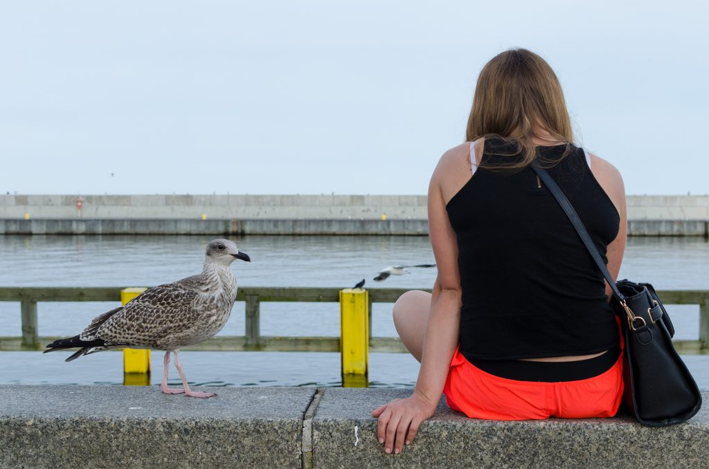 Seagull and girl at the Pier