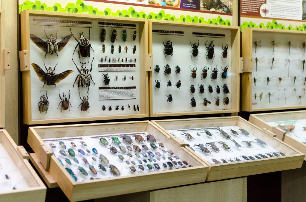 leba-butterfly-museum-bugs-1