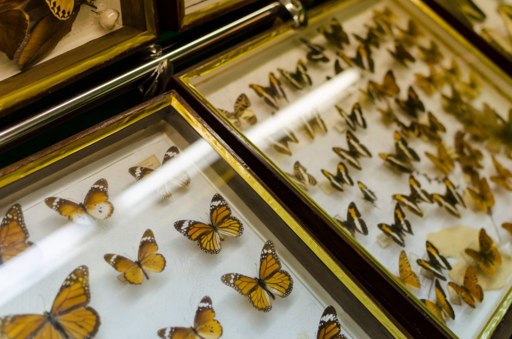 leba-butterfly-museum-exhibits-1