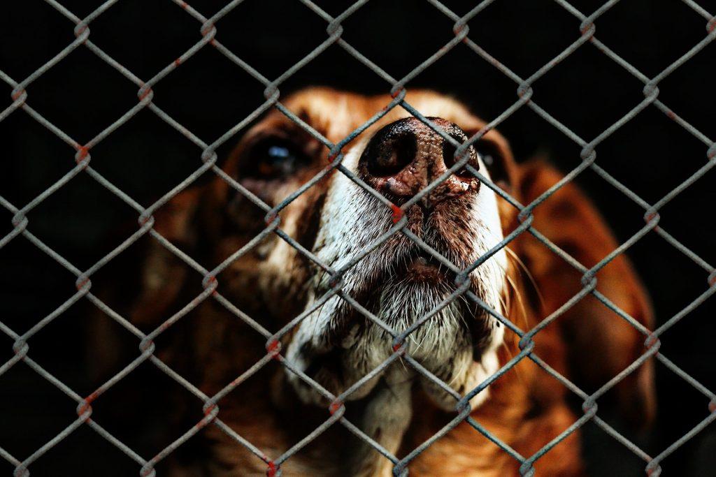 animal-welfare-1116203_1920