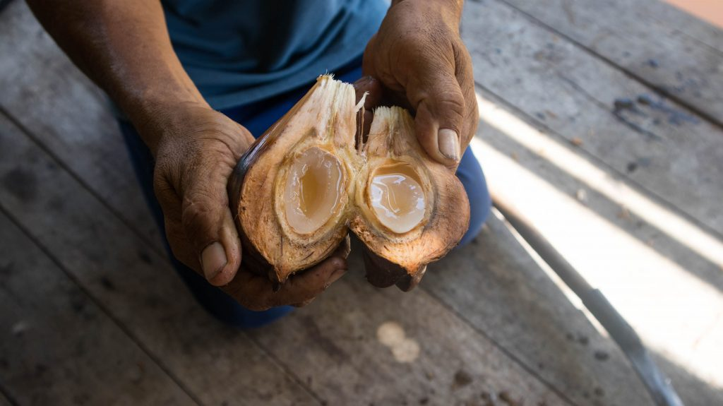 orzech palmy nipy trat tajalandia