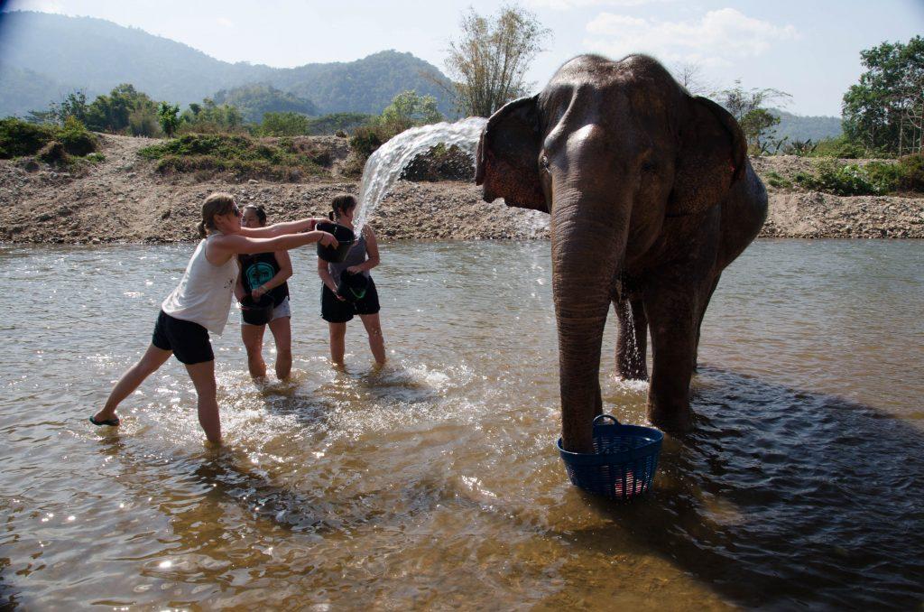 dwie dziewczyny oblewają słonie wiadrami wody