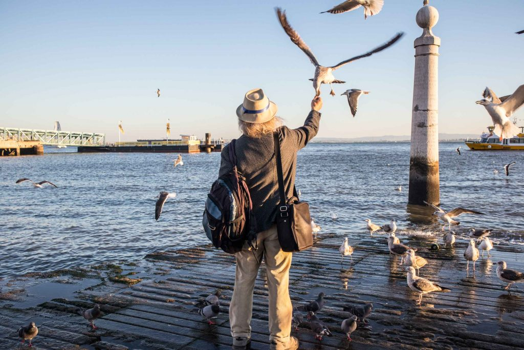 a man feeding seagulls at the tagus river in lisbon