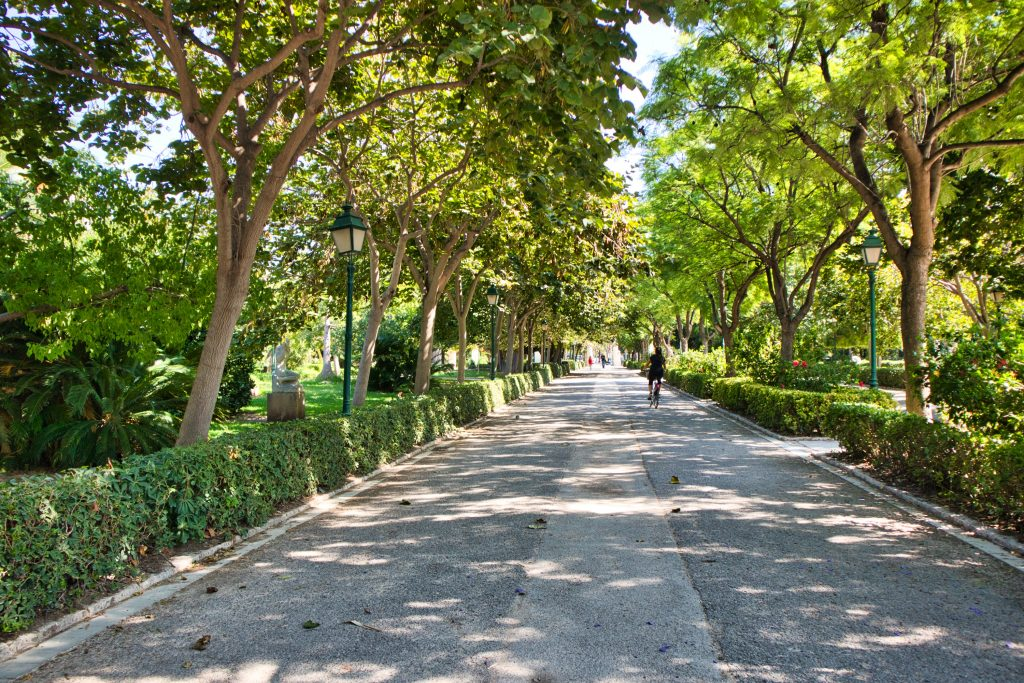 a walking path among trees in a big park in valencia spain