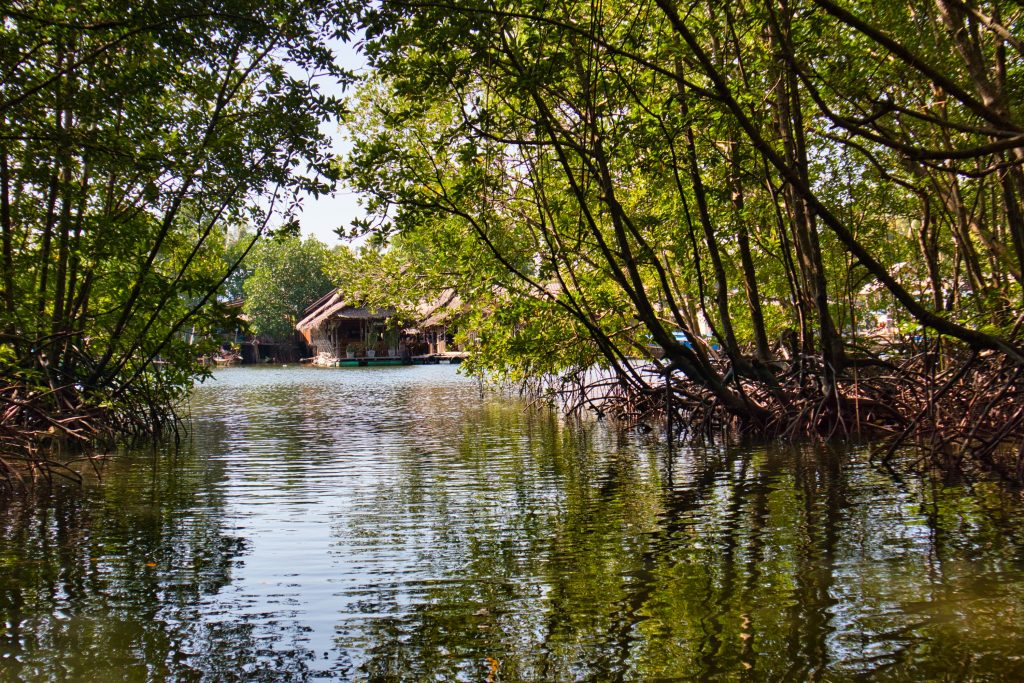 A village seen from a mangrove forest in krabi, thailand.