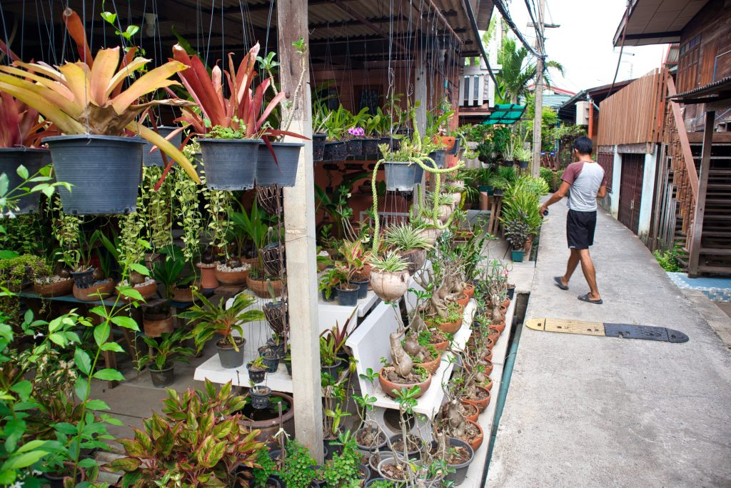 a man walks across the street on koh kret, bangkok. the street is lined with pottery vases and plants.