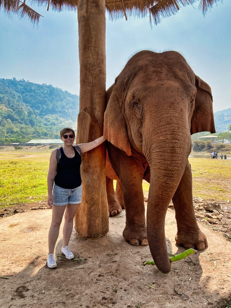 a girl standing next to an elephant at elephant nature park