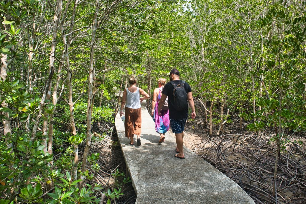 a group of people walking on a concrete path in a mangrove forest, koh lanta, thailand.