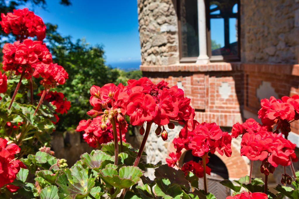 Czerwone kwiaty na tle starego budynku, Sintra, Portugalia.