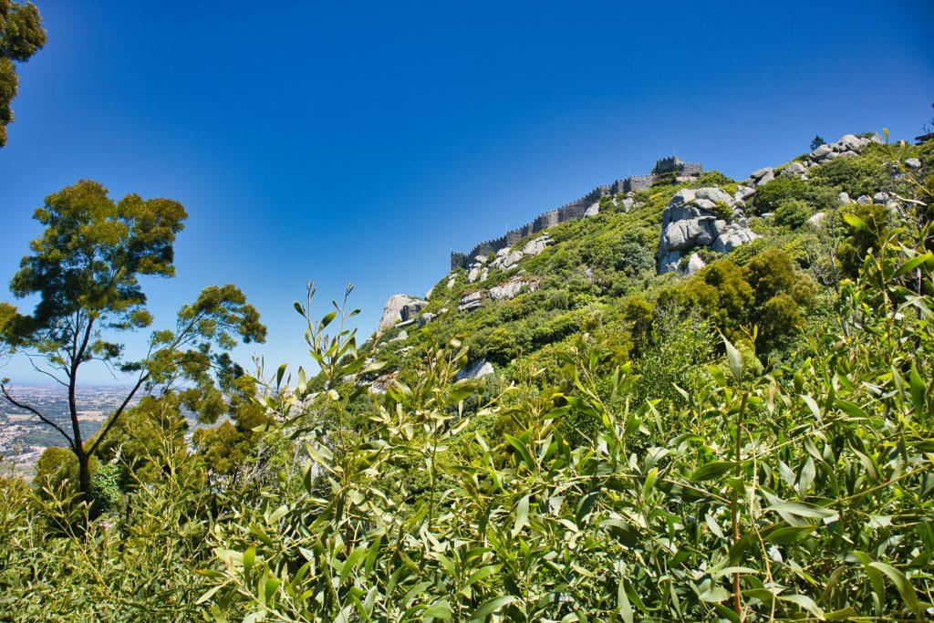 Zamek Maurów w Sintrze widziany z pieszego szlaku w lesie.