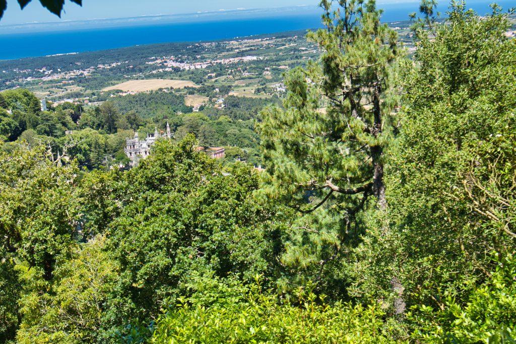 Widok lasu i przyległego zamku z drogi do Zamku Maurów w Sintrze.